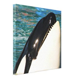 Wal-Sprichwort hallo Leinwanddruck
