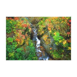 Wald ausgedehnter Leinwand-Druck Leinwanddruck