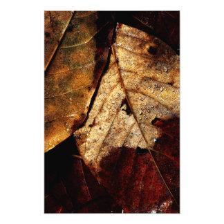 Waldboden Fotodruck