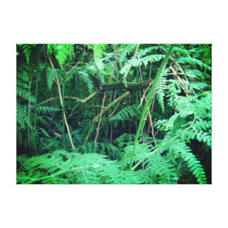 Waldfarne in Sherwood Leinwanddruck