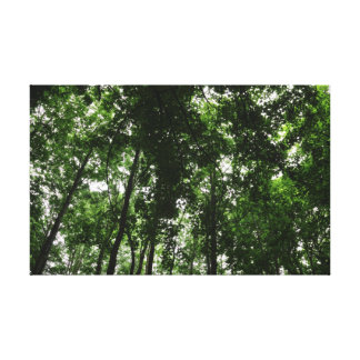 Waldüberdachung 01 leinwanddruck