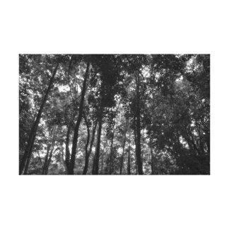 Waldüberdachung 02 BW Leinwanddruck