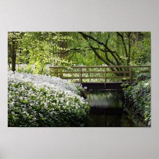 WaldWildblumen-Frühlings-Natur Poster
