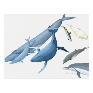 Wale Postkarte