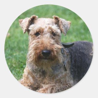 Waliser-Terrierhundeschöne Foto-Aufkleberaufkleber Runder Aufkleber