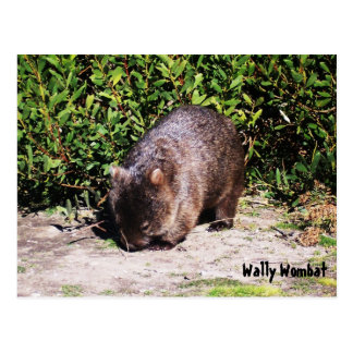 Wally Wombat Postkarte
