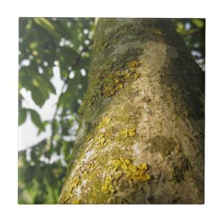 Walnussbaumstamm mit gelbem Moospilz Kleine Quadratische Fliese