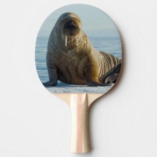Walross-Erholungen auf Sommerseeeis Tischtennis Schläger
