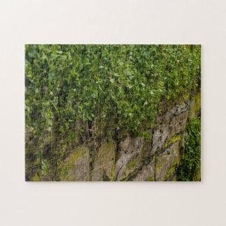 Wand des Efeus