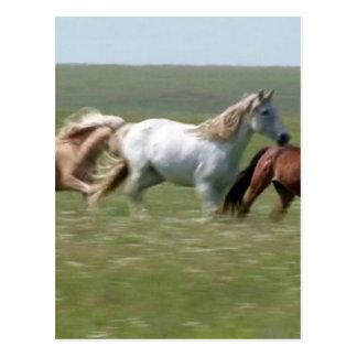 Wandernde Herde amerikanischer MUSTANG Pferde Postkarte