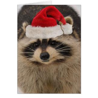 Waschbär-Weihnachtskarte Grußkarte