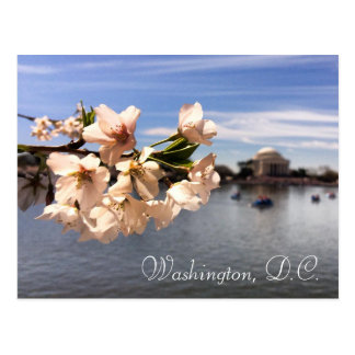 Washington, DC-Kirschblütenpostkarte Postkarte