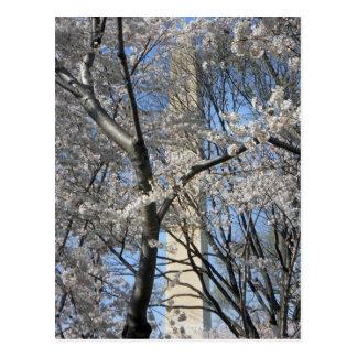 Washington-Monument-Kirschbäume 001 Postkarte