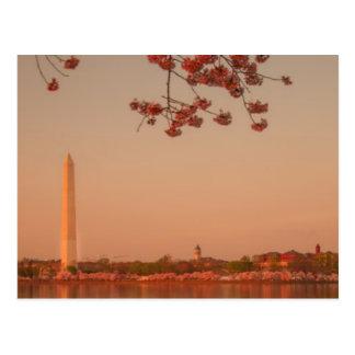 Washington-Monument Kirschblüte am Sonnenuntergang Postkarte