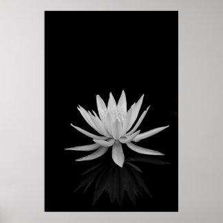 Wasser-Lilie in Schwarzweiss Poster