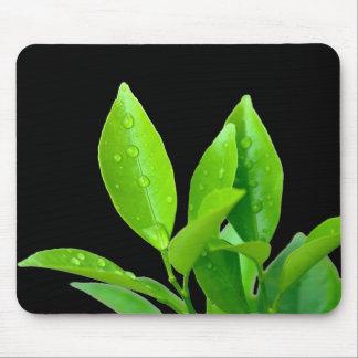 Waterdrops auf Grün-Blätter - Mousepad