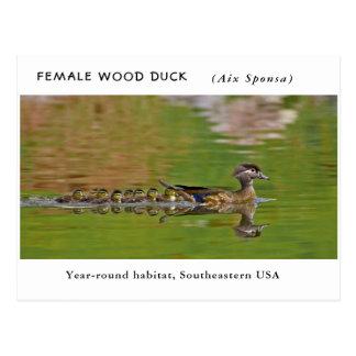"""""""Weibliche hölzerne Ente"""" (mit Kindern) Postkarte"""