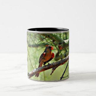 Weibliche Kardinals-Kaffee-Tasse Zweifarbige Tasse