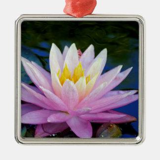 Weiche rosa Wasserlilie Silbernes Ornament
