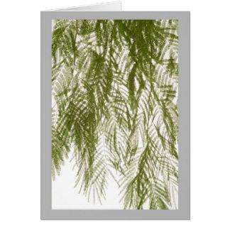 Weiches Frühlingszeit-Akazien-Blätter auf Weiß Karte
