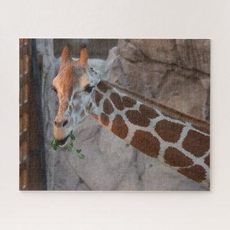 Weiden lassen der Giraffe
