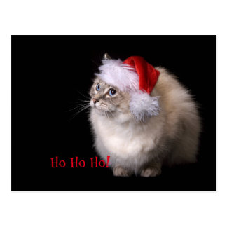 WeihnachtenRagdoll Katze Postkarte