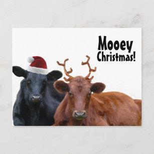 Weihnachtsfeiertags-Kühe in der Weihnachtspostkarte