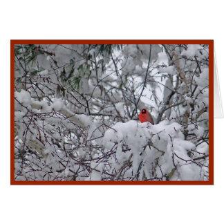 Weihnachtskarte des Schnee-Kardinals-6211-2 Karte