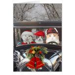 Weihnachtskatzen im Auto
