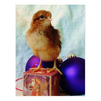 Weihnachtsküken 2 postkarte