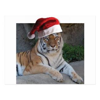 Weihnachtsmannmütze-bengalischer Tiger Postkarte