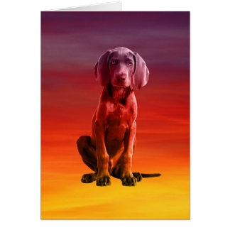 Weimaraner Hund, der auf Strand sitzt Karte