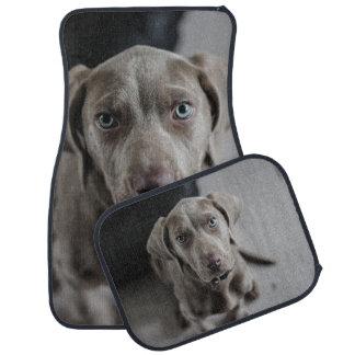 Weimaraner Hundezucht-Liebhaber Automatte