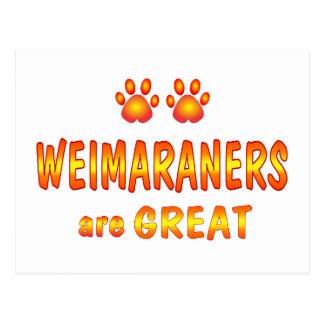 Weimaraners sind groß postkarte