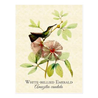Weiß aufgeblähte Smaragdkolibri-Vintage Kunst Postkarte