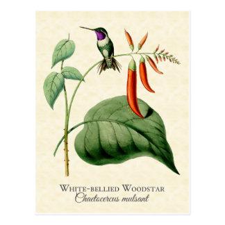 Weiß aufgeblähte Woodstar Kolibri-Vintage Kunst Postkarte