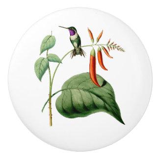 Weiß aufgeblähter hölzerner Stern-Kolibri Keramikknauf