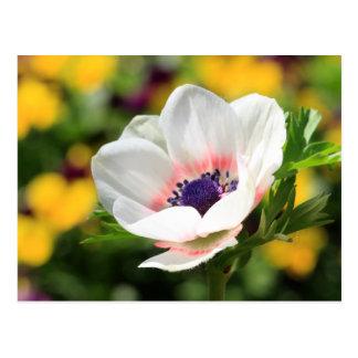 Weiße Anemone Postkarte