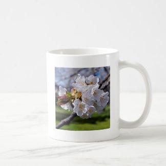 Weisse Apfelblüten im Frühling Kaffeetasse