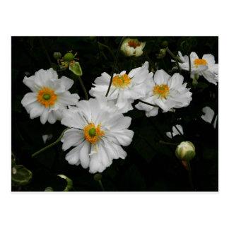 Weiße Blume Postkarte