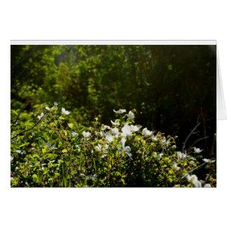 Weiße Blumen in der Sonnenlicht-Anmerkungs-Karte Karte