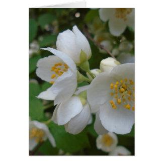 weiße Blumen Karte