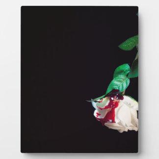 Weiße blutrote Seite der Rose Fotoplatte