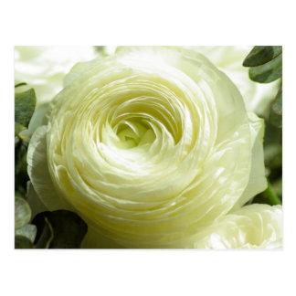 Weiße Butterblume-Blumen-Postkarte Postkarte