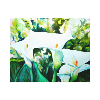 Weiße Calla-Lilien Leinwanddruck