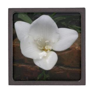 Weiße Fresia Blume Kiste