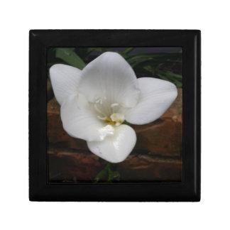 Weiße Fresia Blume Schmuckschachtel