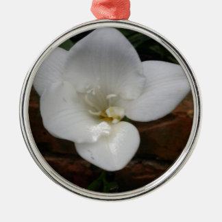 Weiße Fresia Blume Silbernes Ornament