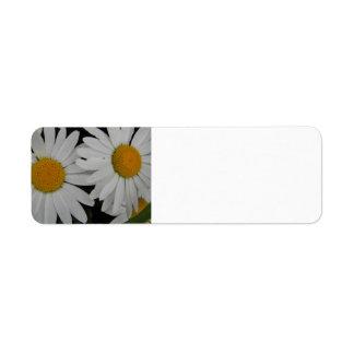 Weiße Gänseblümchen-in voller Blüte kundengerechte Rücksendeetikett