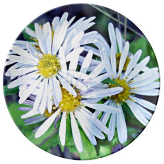 Weiße Gänseblümchen Teller
